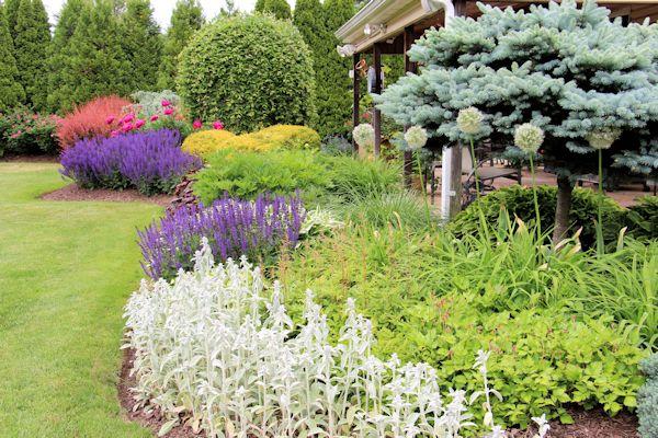 Incroyable Salvia June