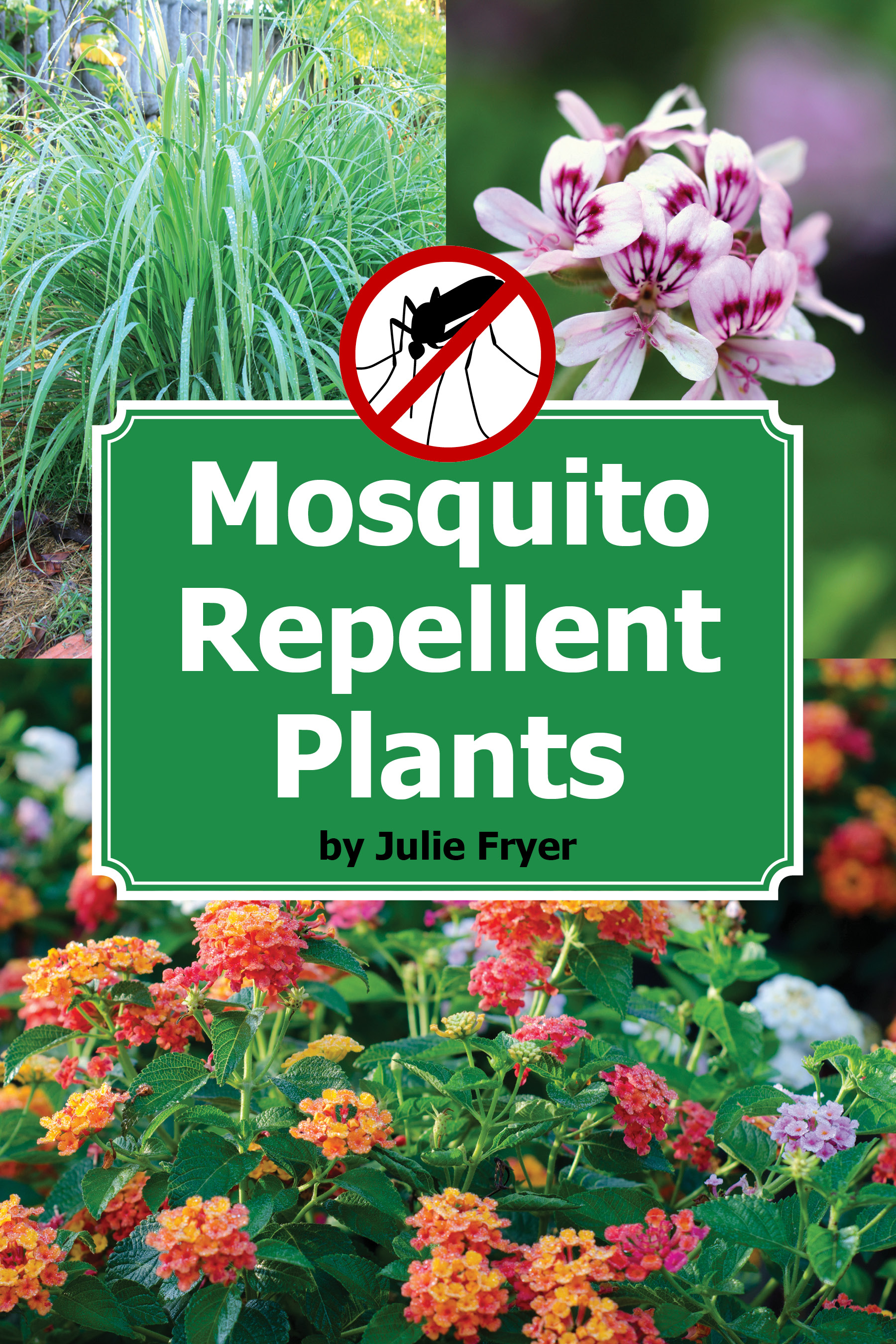 Repel Mosquitoes Naturally With These Beautiful Plants Gardening