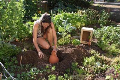 Planting_Oya