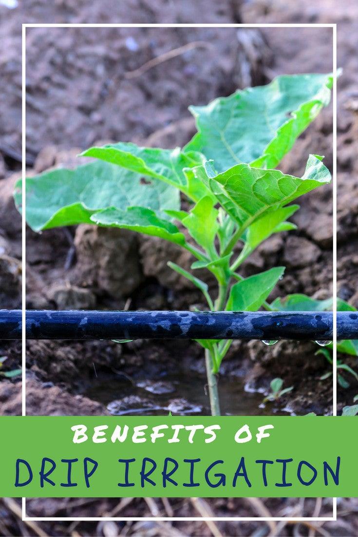 Benefits of Drip Irrigation