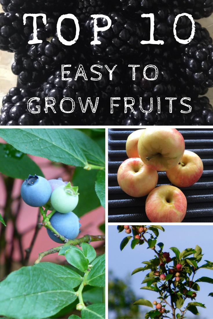 top10easytogrowfruits