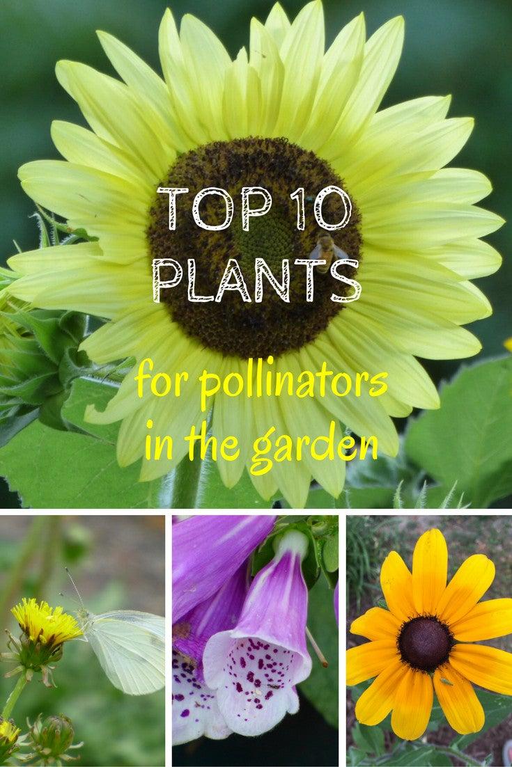 Top 10 Plants for Pollinators in the Garden