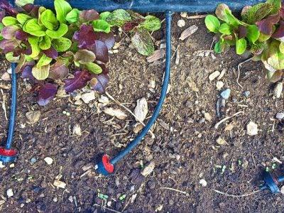 7-gardeninginadrought.com-save-water-save-money