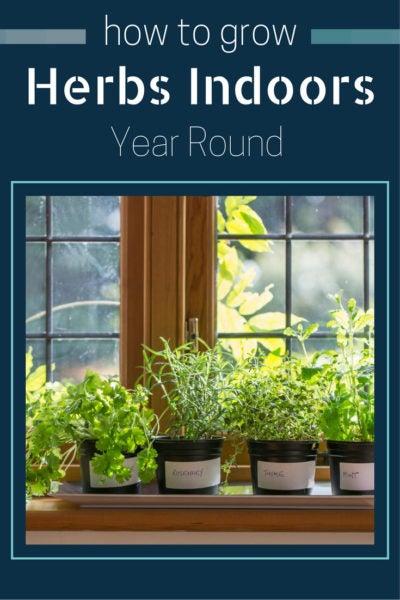 Amp Peter Burke Author Year Round Indoor Salad