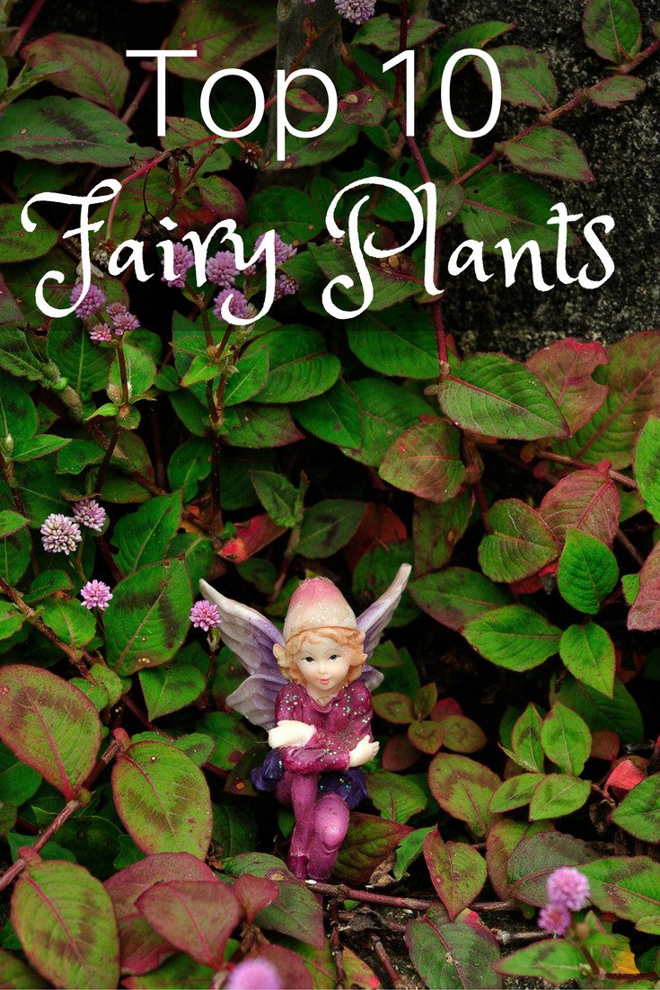 Top 10 Plants For Fairy Gardens Gardening Know How S Blog