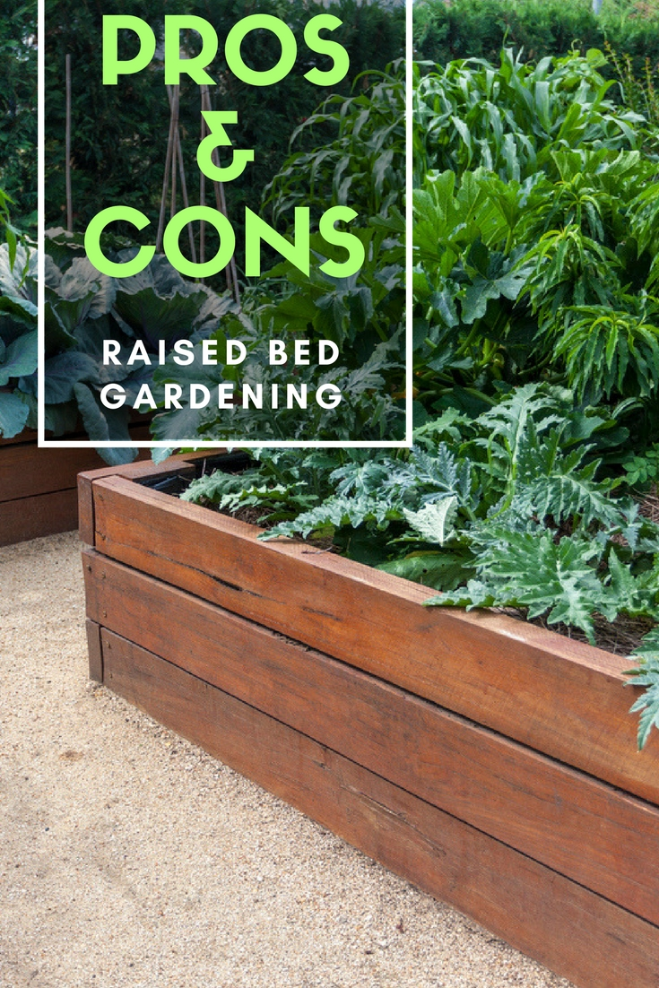 pros and cons of raised bed gardening - Raised Beds Garden