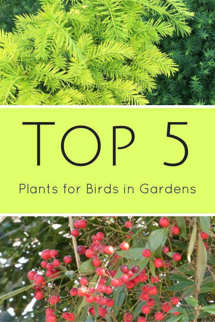 top 5 plants for birds in gardens