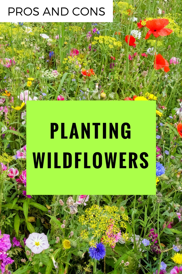 pros and cons of planting wildflowers - Wildflower Garden