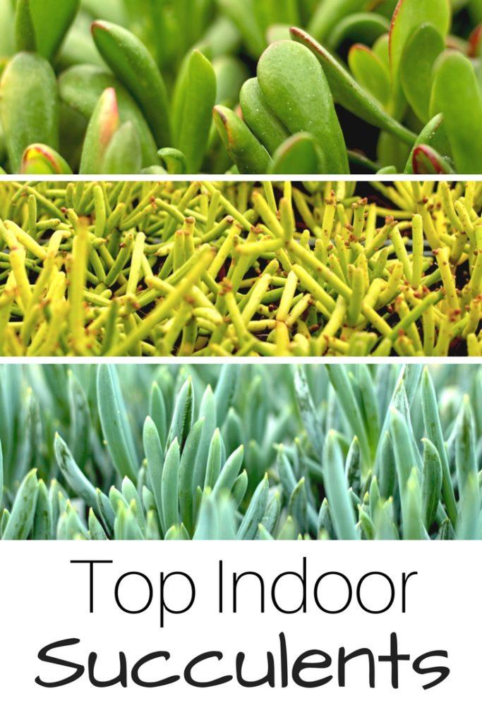 Top Indoor Succulents - Gardening Know How\'s Blog