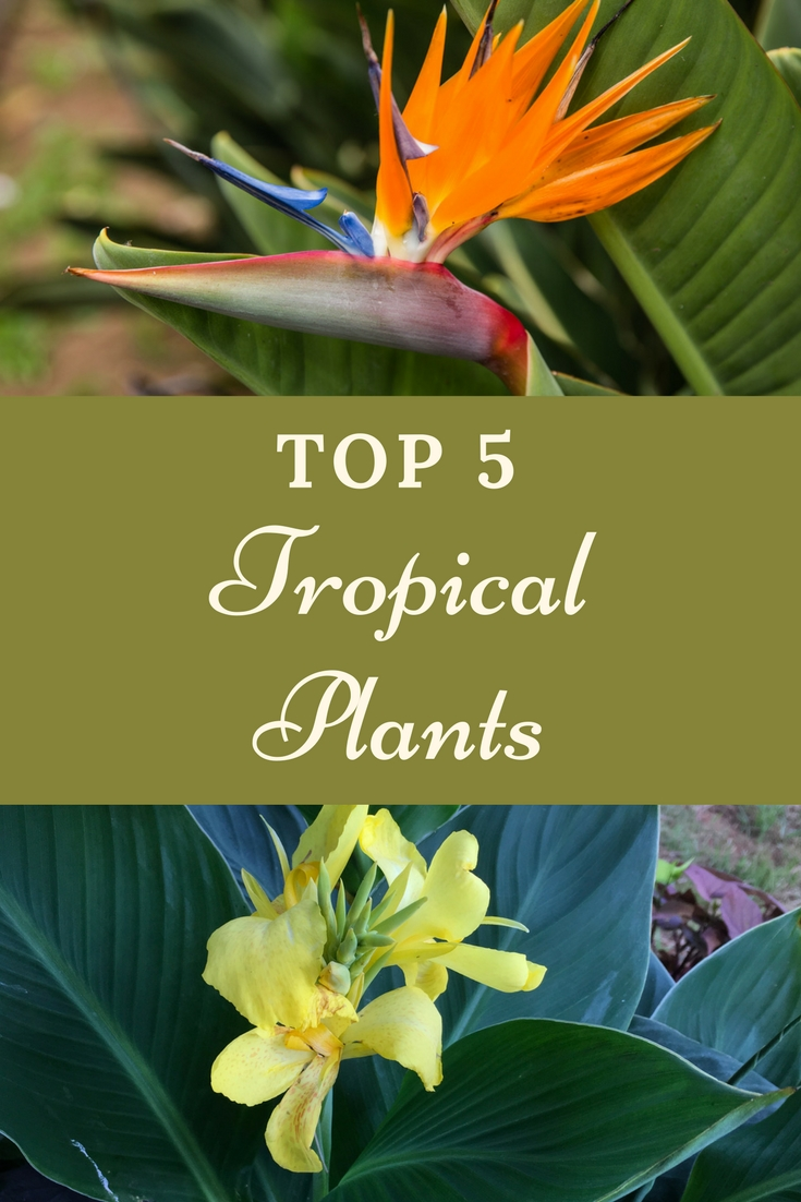 Top 5 Tropical Plants For Gardens Gardening Know How S Blog