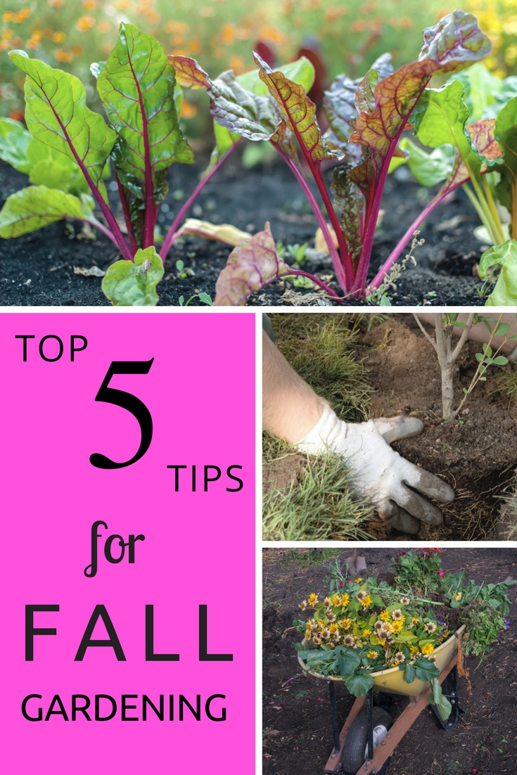 Top 5 Tips For Fall Gardening Gardening Know How S Blog