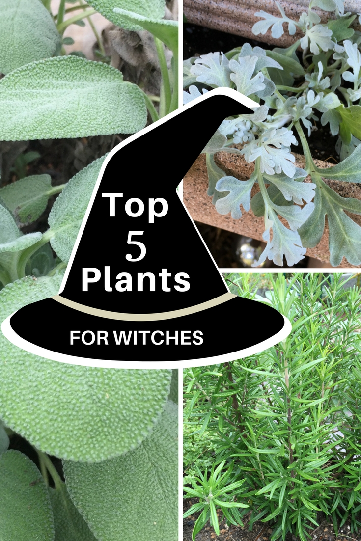 Top 5 Plants For Witches Gardening Know How S Blog