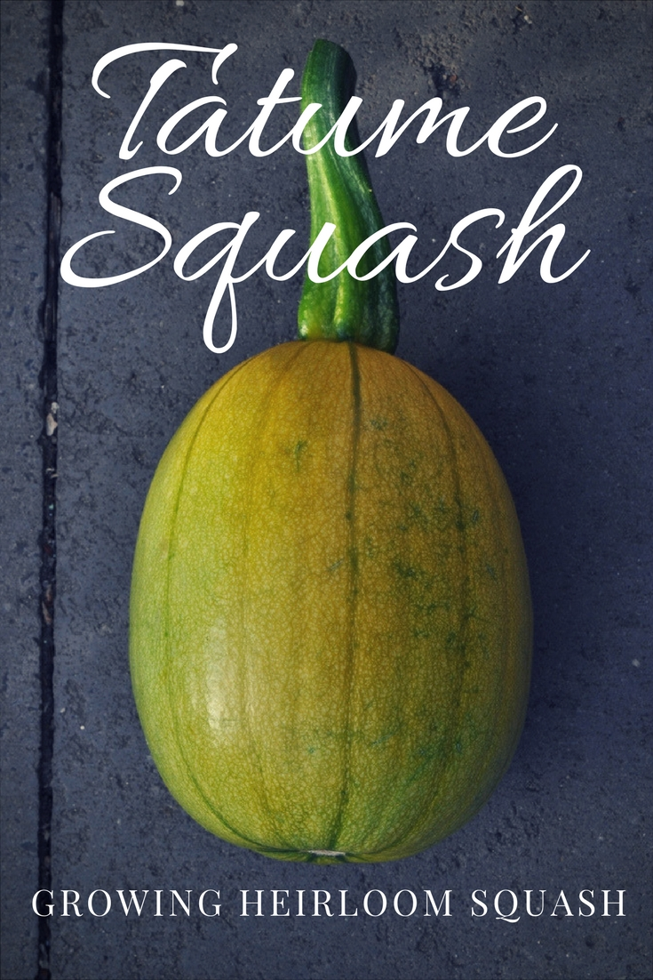 how to prepare tatume squash