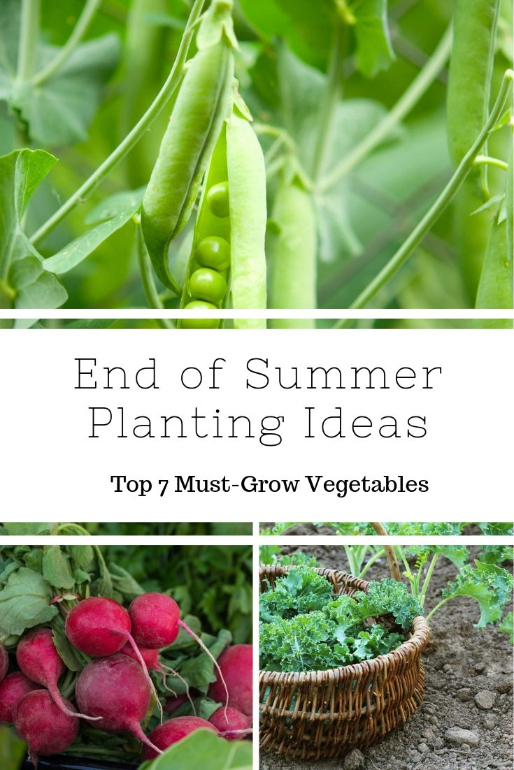End Of Summer Planting Ideas Top 7 Must Grow Vegetables