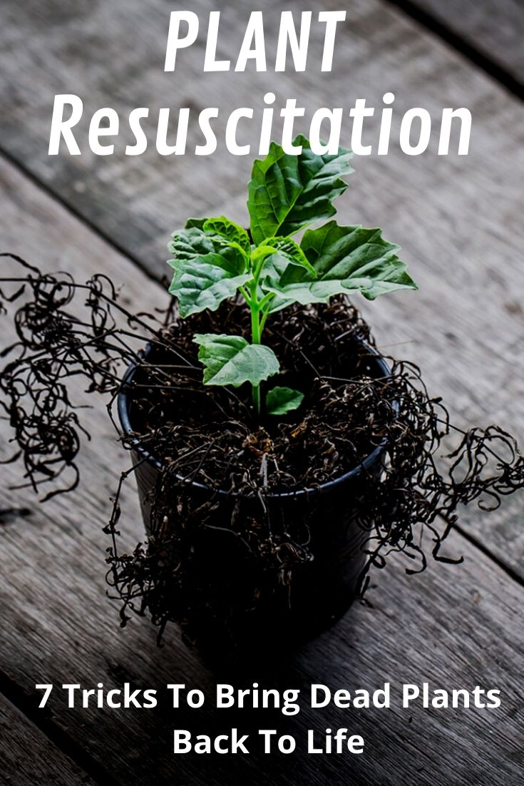 Plant Resuscitation 7 Tricks To Bring Dead Plants Back To Life Gardening Know How S Blog,Paper Easy Diy Christmas Decorations For Kids