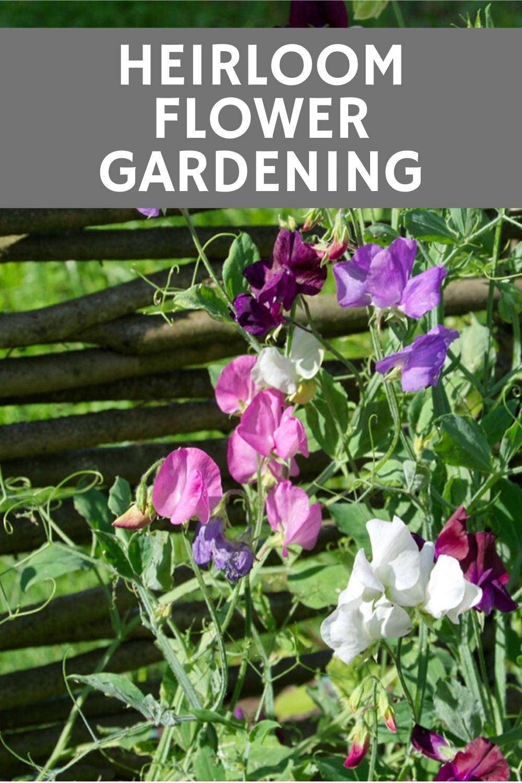 Heirloom Flower Gardening Old Fashioned Flowers For A Modern Garden Gardening Know How S Blog