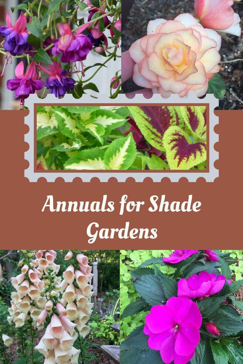 Gardening In Shade Best Annuals For Shade Gardens Gardening